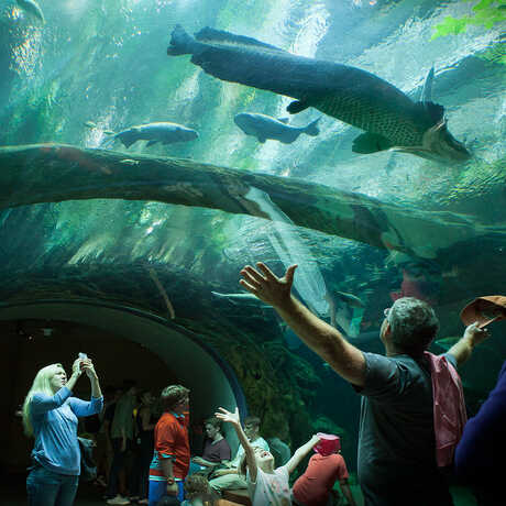 Visitor with arms outstretched in awe in Amazon Flooded Forest Tunnel