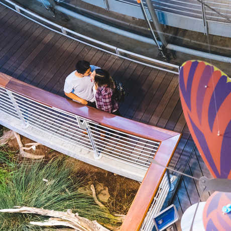 Aerial photo of couple kissing on the boardwalk next to the Osher Rainforest