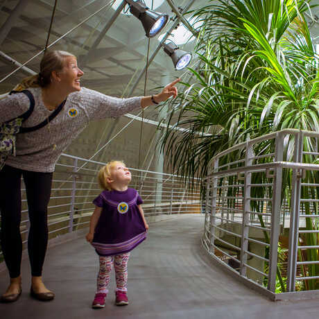 Woman and cute toddler look at butterflies in rainforest exhibit at California Academy of Sciences