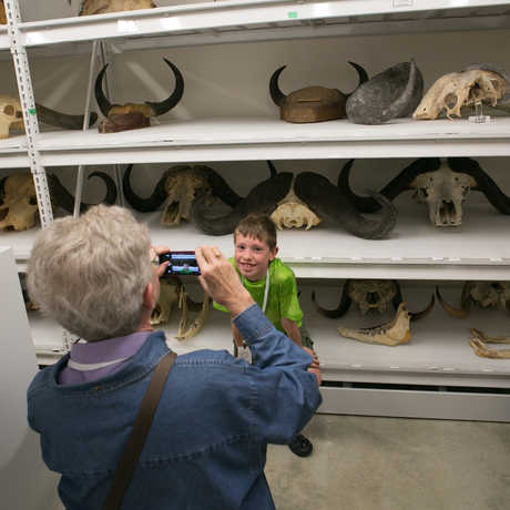 A young guest poses with skull specimens in the Academy collections