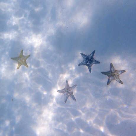 Multicolored sea stars on the sandy seafloor off Zanzibar