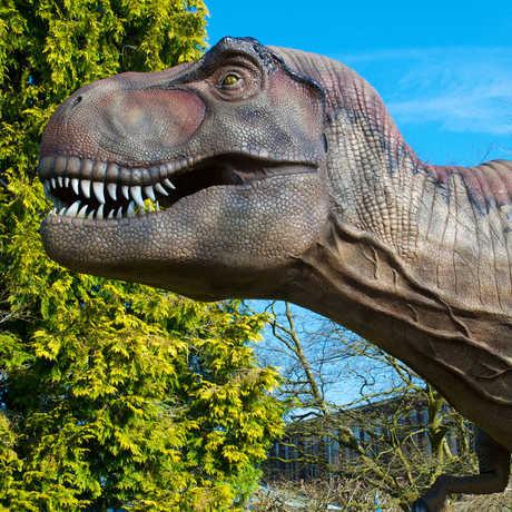 Life-size dinosaur model of a Tyrannosaurus rex.