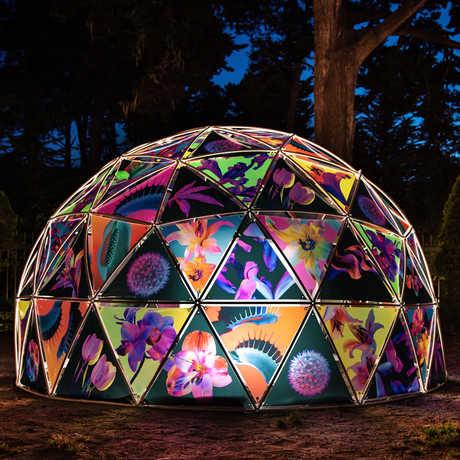 Maggie West CAS Dome
