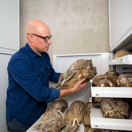 California owls