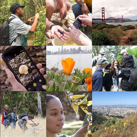 City Nature Challenge 2017 © California Academy of Sciences