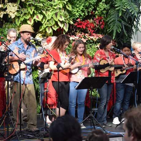 Ukelele troupe playing festive songs