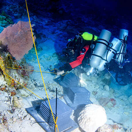 Academy scientist places an ARMS module on a coral reef in Curacao