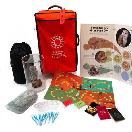 Owl_Pellet_Classroom_Kit_Display