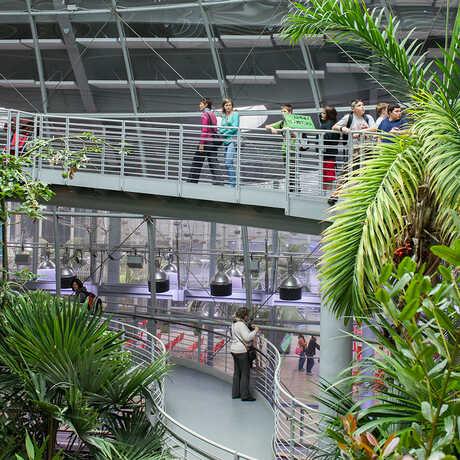 Osher Rainforest