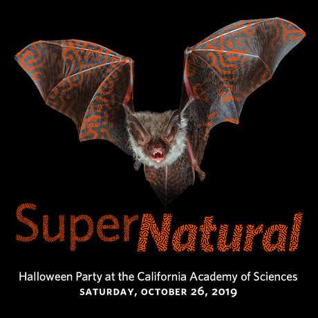 SuperNatural 2019 event logo with flying bat