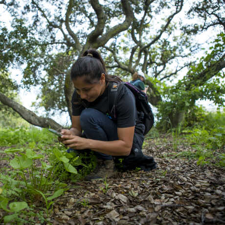 Community scientists documents wildlife with iNaturalist