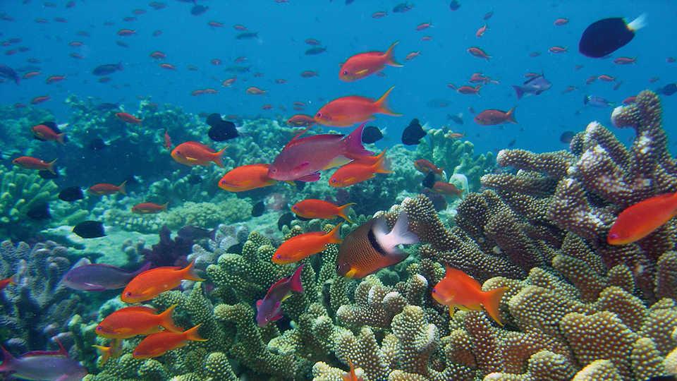 CoralReef_WorldFish