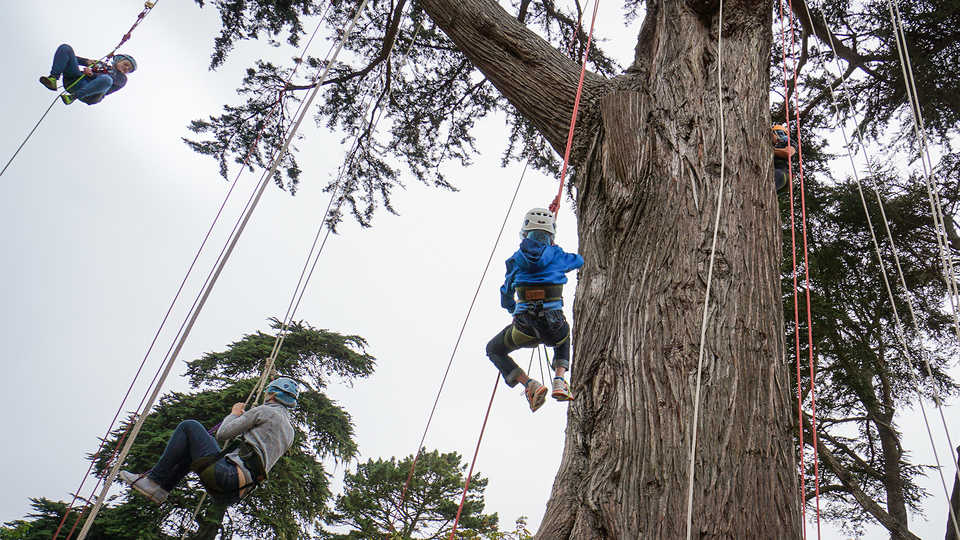 Students ascending into the canopy.