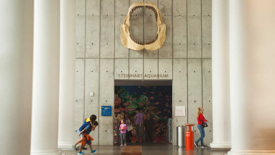 Young children at the entrance to the Steinhart Aquarium.