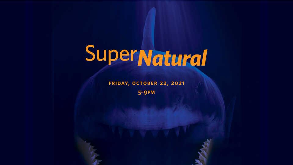 SuperNatural hero image with giant shark