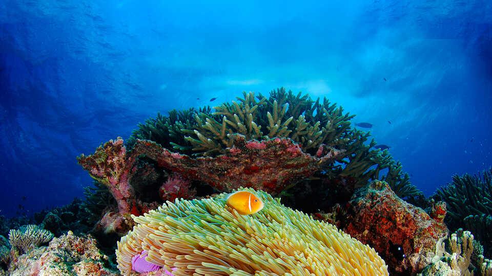 A stunning coral reef in blue ocean waters