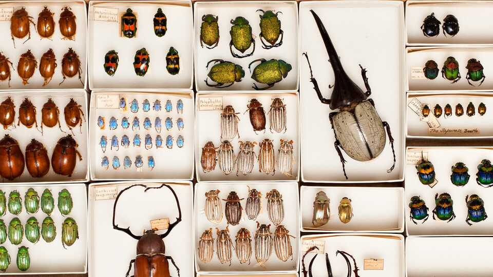 A peek at the entomology collection at the California Academy of Sciences