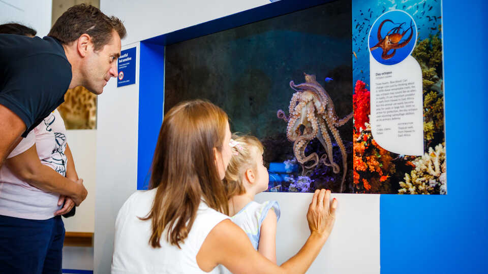 Member family looking at the day octopus exhibit