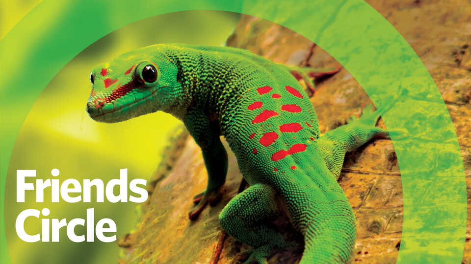 Friends Circle banner with day gecko on tree