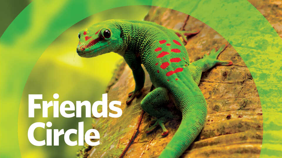 Friends Circle banner image with day gecko