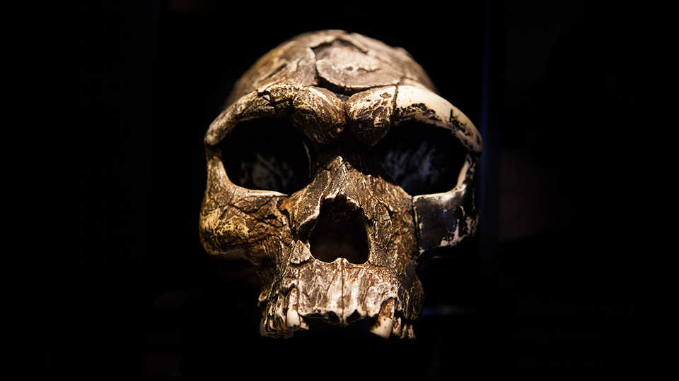 Straight-on view of the dramatically lit skull of an ancient human.