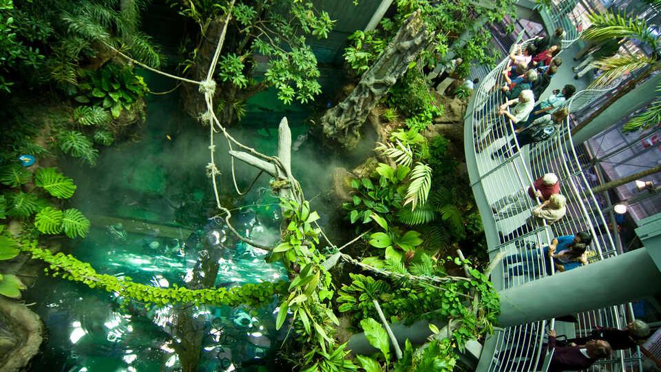 RainforestDome_DaveSchumaker